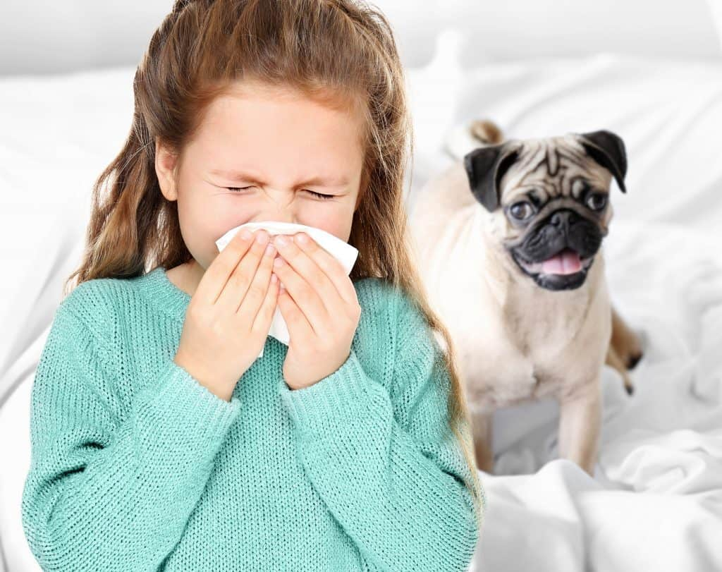Indoor Allergies: Little girl with tissue on bed with puppy