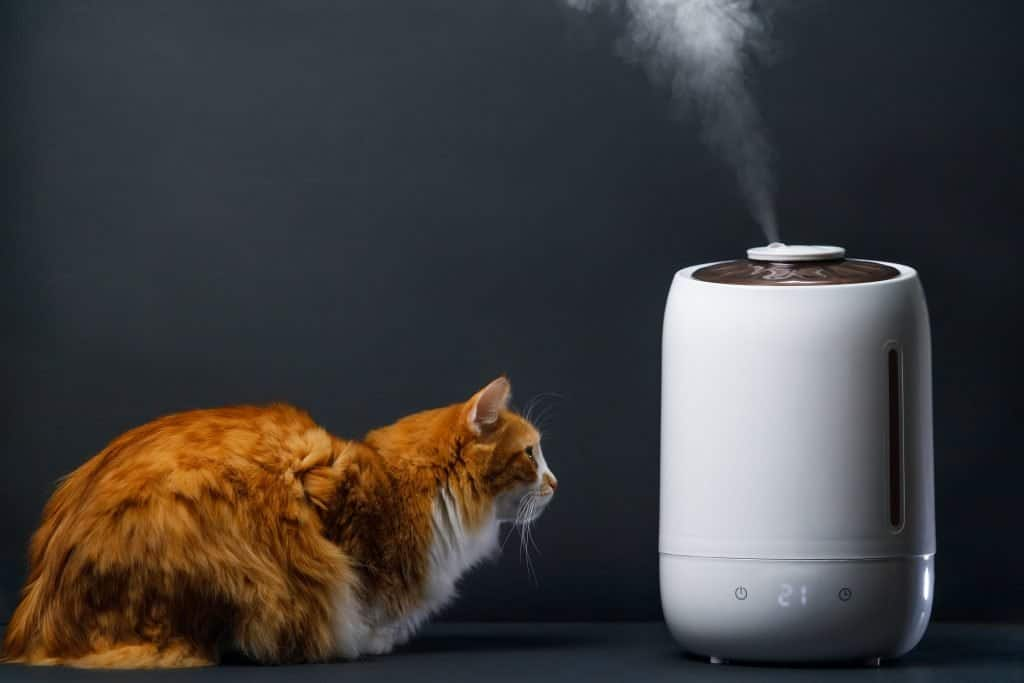 Humidifier For Cats